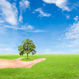 Green Earth concept,hand holding tree Stock Images