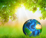 Green Earth on Fresh spring green grass with green leaf Stock Photos