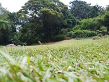 Green lawn and huge trees stock images