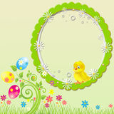 Green easter chick & eggs background Royalty Free Stock Photo