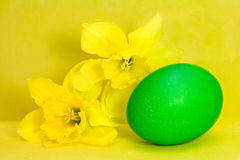 Green Easter egg and narcissus Stock Image