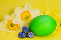 Green Easter egg and narcissus Royalty Free Stock Photo