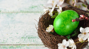 Green easter egg in a nest Stock Images
