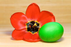 Green Easter egg and tulip Royalty Free Stock Image