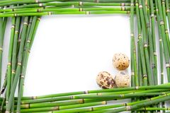 Green Easter frame from the stems Royalty Free Stock Photos