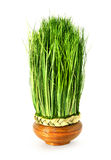 Green easter grass Stock Photography