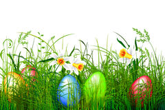 Green easter grass Royalty Free Stock Photography