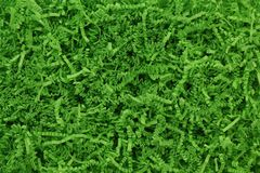 Green Easter grass background royalty free stock photo