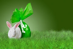 Green Easter on grass. White Rabbit and green Easter egg on grass on green background Stock Photography
