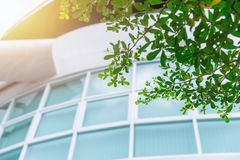 Green eco building office windows Stock Image