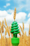 Green eco bulb in field with harvest Royalty Free Stock Image
