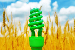 Green eco bulb over field with golden harvest Royalty Free Stock Photo