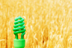 Green eco bulb over golden field Royalty Free Stock Images