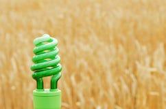 Green eco bulb over golden harvest Stock Photo