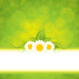 Green eco frame Stock Photos