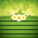Green eco frame Royalty Free Stock Photo