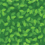 Green eco leaves seamless background Stock Image