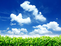 Green Eco Nature Sky Clouds and Grass. A green, eco nature background with a bright blue sky of clouds and green grass on the bottom. Add your message to the Royalty Free Stock Images
