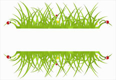 Green ecological banner. With daisies Royalty Free Stock Photos