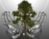 Green ecological tree in glass hands on grey back Royalty Free Stock Photo