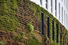 Green ecological wall. Building with green ecological wall covered with plants in Rotterdam in the Netherlands Stock Photos