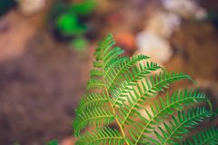 Green ecology, fern in rainforest. For background stock photo