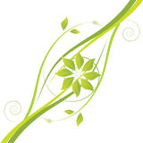 Green ecology floral Stock Images