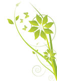 Green ecology floral background Royalty Free Stock Photography
