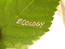 Green ecology leaf Stock Images