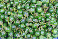 Green eggplant in the market Royalty Free Stock Images