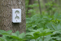 Green Electricity. Power socket on tree trunk in the green forest. Symbol for green electricity Stock Photo