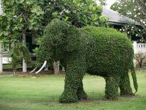 Green elephant from Carmona retusa (Vahl) Masam Stock Image