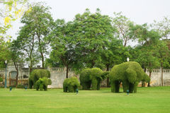 The green elephant trees in Bang Pa-In Palace Royalty Free Stock Photos