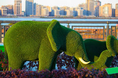 Green elephants made by clipping trees royalty free stock photo