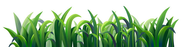 Green elongated grasses Royalty Free Stock Photography