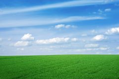 Green empty field. Green field with a nice sky, peaceful background Stock Photos