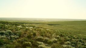 Green steppe at sunny day. Green empty steppe at sunny day stock video