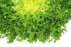 Green endive. Leaf vegetable - green endive (Cichorium endivia Royalty Free Stock Photography
