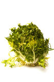 Green endive Stock Image