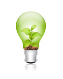 Green energy. Concept - plant in bulb Stock Photos