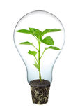 Green energy. Light bulb with green plant inside Stock Photography