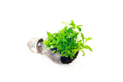 Green energy. Electrical energy is friendly to nature Royalty Free Stock Images