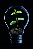 Green energy. Concept with plant growing inside light bulb Royalty Free Stock Photo