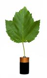 Green Energy. Leaf growing from battery, green energy stock photos