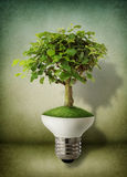 Green energy concept. Green tree growing out of a bulb - green energy concept Stock Photos