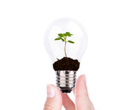 Green energy concept : Bulb of plant on women hand Royalty Free Stock Photography