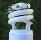Green energy. Concept:a compact fluorescent bulb with leaves Royalty Free Stock Photos