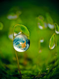 Green energy concept. Fresh Earth in a water drop Stock Photo