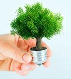 Green energy concept. A green energy concept in hand Royalty Free Stock Image