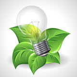 Green energy concept - Power saving light bulbs Stock Photo